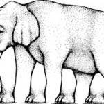 Elefant von Shepard